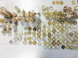 Fungal cultures (pic M. Sosa)